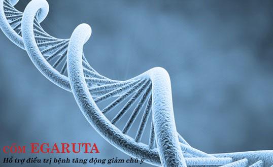 Tăng động giảm chú ý có liên quan tới yếu tố gen